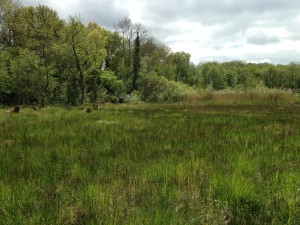 Cothill NNR is known for its fens and their rich invertebrate life.