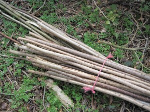 An equally neat pile of hedgelaying binders