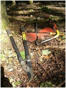 Loppers versus bowsaw - which to use?