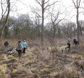 Coppicing in Brasenose Wood, March 2015.
